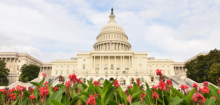 capitol-building-flowers-shutterstock-feat