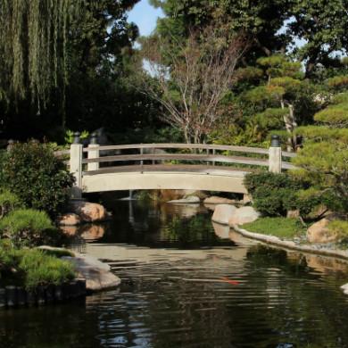 California State University, Long Beach: Moratorium on New Student Organizations