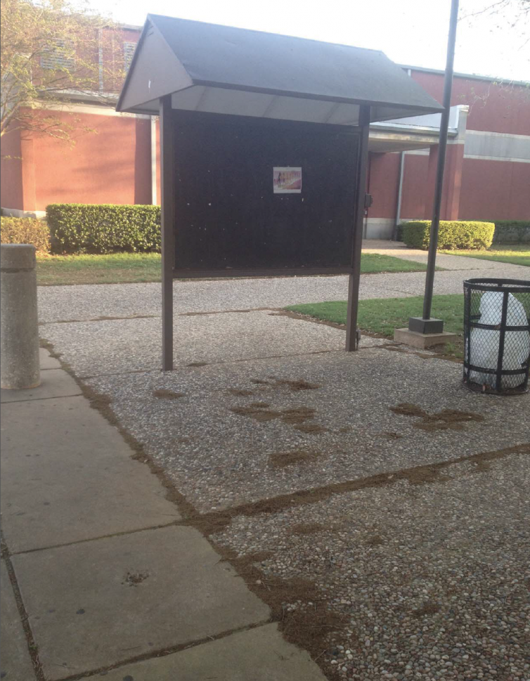 Photo of Blinn College's Free Speech Area