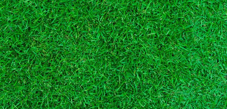 green lawn field quad feat