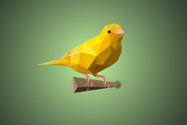 Canary illustration